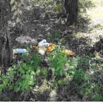 lixo bosque
